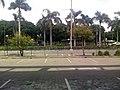 Palms at empty car park - panoramio (1232).jpg