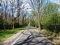 Path, Sydenham Hill.JPG