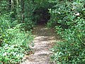 Path, Tinney's Firs - geograph.org.uk - 1408233.jpg