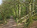 Path through King's Cliff Wood, North Petherton - geograph.org.uk - 1241826.jpg
