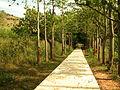 Pathway at Udayagiri Park.JPG
