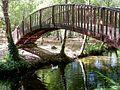 Pato bajo el puente (8072103720).jpg