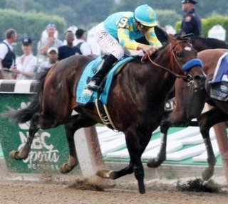 Paynter (horse) American Thoroughbred racehorse