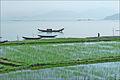 Paysage au sud de Hué (4393644809).jpg