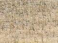 Perdices, subiendo hacia los molinos de Préjano desde Muro de Aguas - panoramio.jpg