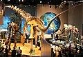 Perot Museum Alamosaurus.jpg