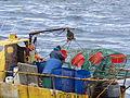 Pesca de centolla en la Bahía Ushuaia 13.JPG