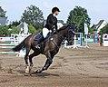 Pferdesportveranstaltung in Seifersdorf (Jahnsdorf) .. 2H1A8404WI.jpg