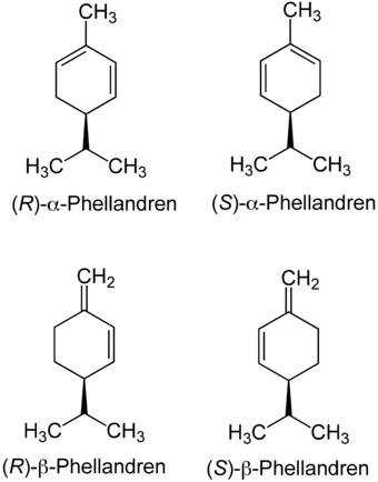 Phellandren-Isomere.png
