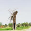 Photo Arbre Mort sur la route Koundoul-Ethena.png