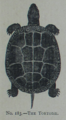 Picture Natural History - No 183 - The Tortoise.png