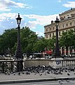 Pigeons pont Notre-Dame, Paris 4e 3.jpg