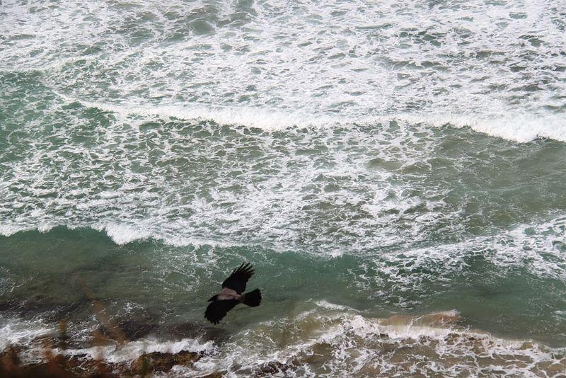 מעוף מעל חוף געש