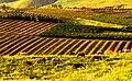 PikiWiki Israel 4207 landscape in Ramat Hagolan.jpg