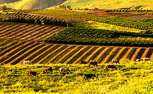 Golan Heights - Farms in the Golan Heights