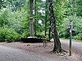 Pilz-Baum von 2011 am Esslinger Tor 479 m. ü. NN - panoramio (1).jpg