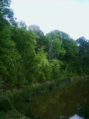 Piney Woods - A creek running through the Piney Woods in Northeast Texas.