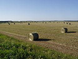 Pizhanka field.JPG