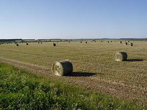 Pizhansky District - A field near Pizhanka in Pizhansky District