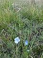 Plants from Ostritsa (9).JPG