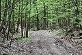 Pod Chroustovem-alibaba - panoramio (2).jpg