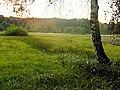 Podmokłe łąki - panoramio (1).jpg