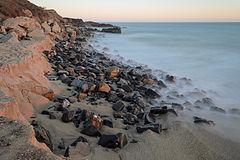 חוף סלעי