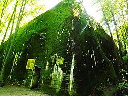 Pozostałości bunkra Hitlera.JPG