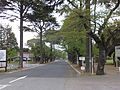 Promenade of the Sakuragi Cemetery.jpg