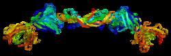 Proteino VEGFA PDB 1bj1.png