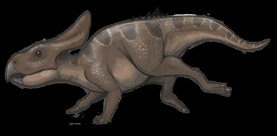 Protoceratops reconstruction