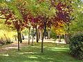 Puigcerda. Parque en otoño - Guadalupe Cervilla.jpg