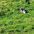 Rabbit (5114491289).jpg