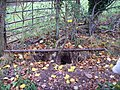 Rabbit warren on the bridleway - geograph.org.uk - 610106.jpg