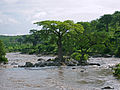 Rainy season in Ruaha.jpg