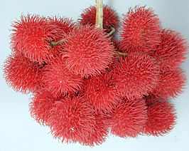 Rambutan Fruit.jpg