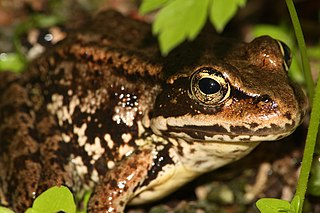 Amphibians and reptiles of Mount Rainier National Park