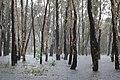 Really wet still (Kakadu National Park).jpg
