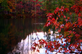 Red-tree-fall-lake - West Virginia - ForestWander.png