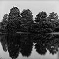 Reflection (33115439).jpeg
