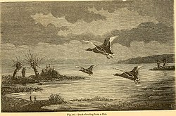 Waterfowl hunting for Wisconsin exterior goose season