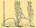 Rheingauer Erziehung 506.jpg