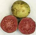 Ripe guava.jpg