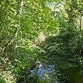 River Colne, from Stone Bridge, Great Yeldham (geograph 4480855).jpg