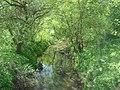 River Lyubushka4.JPG