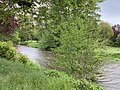 Rivière Cousin - Vault-de-Lugny (FR89) - 2021-05-17 - 2.jpg