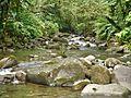 Rivière du Parc national Guadeloupe.jpg
