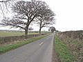 Roadside trees and hedgerows in winter - geograph.org.uk - 1800072.jpg