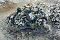 Rocks and coins - Mount Osore - Mutsu, Aomori - DSC00464.jpg