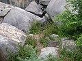 Rocks of sayed bassa malai in krishnagiri district Tamil Nadu.jpg